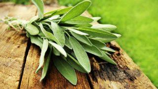 Растительные препараты при климаксе