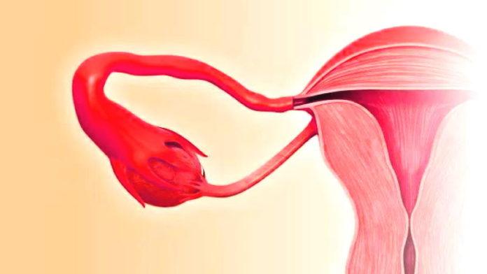 Есть ли фолликулы в яичниках при климаксе? Нормальный размер яичников